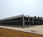 桐柏县香菇扶贫基地