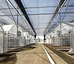 西峡县香菇种植基地项目