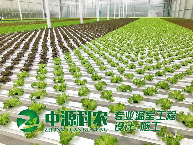 无土栽培有限公司