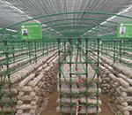 食用菌大棚厂家