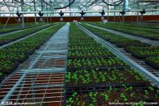 无土栽培技术公司