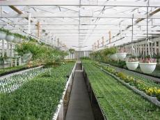 无土栽培专业公司