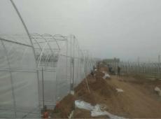 南航羊肚菌种植基地