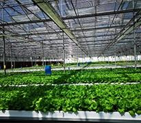 无土栽培技术怎么样