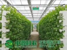 河南郑州无土栽培技术公司