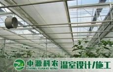 湖北武汉连栋玻璃温室大棚