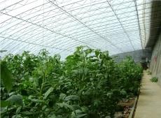 日光温室建设的遮阳幕布的优势